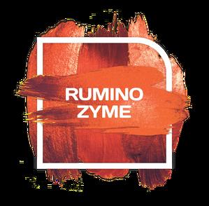 Rumino Zyme Logo (2)