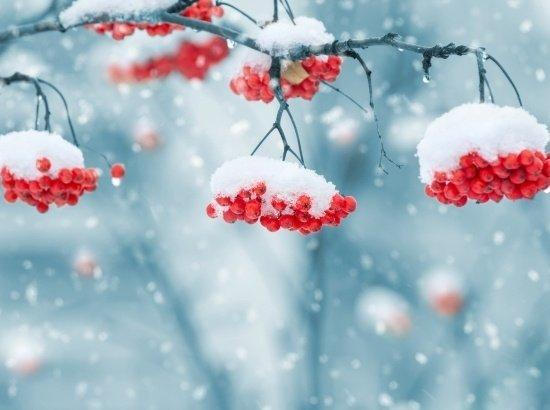 Zúzmarás téli mámor