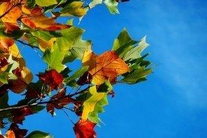 őszi ajánlat Budapest