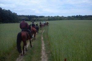 Hungary horse riding