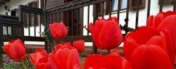 Blumentage im Gasthof zur Alten Weinpresse