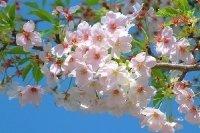 Tavaszi rügyfakadás az Öreg Présben