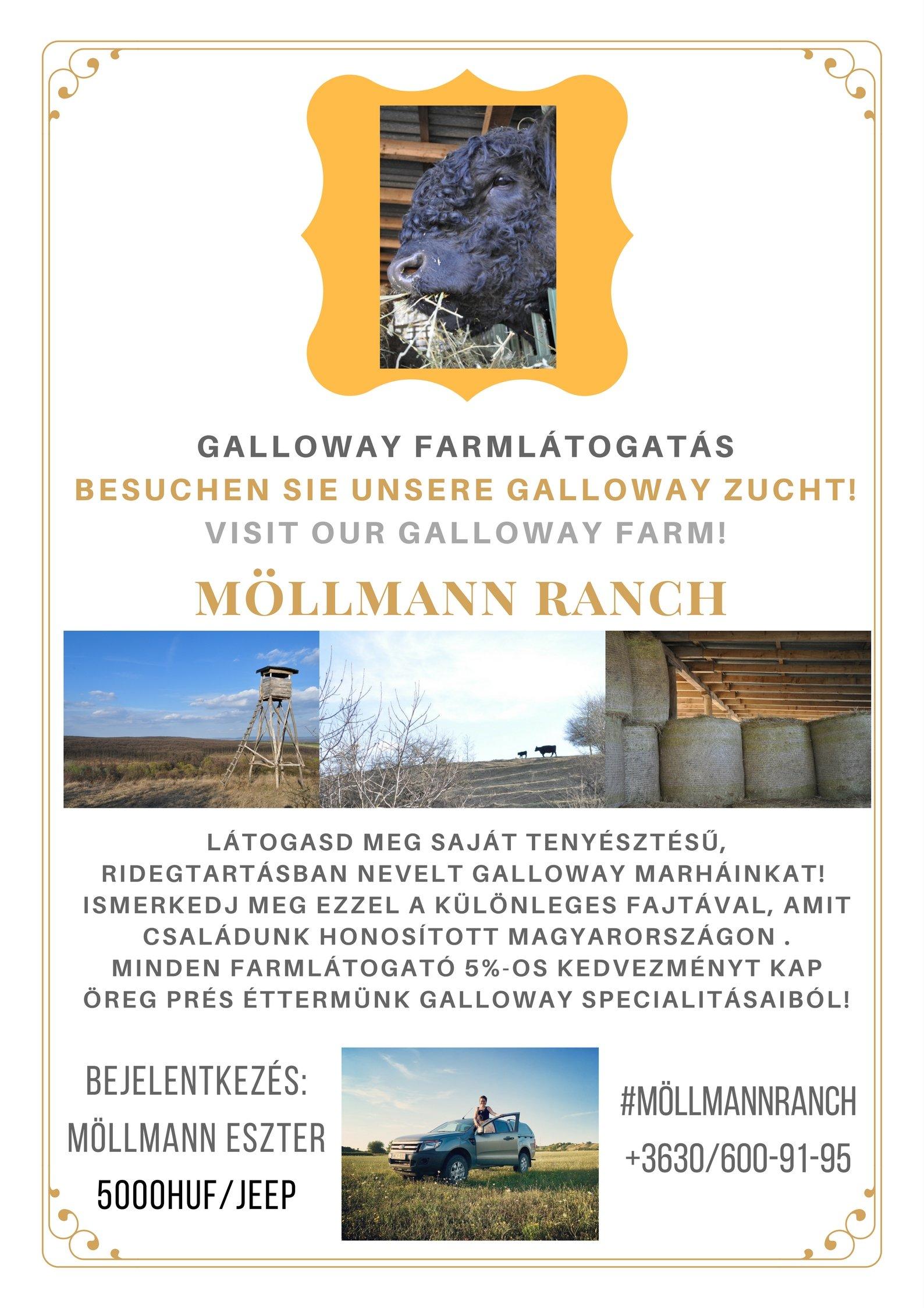 szobákba Gallowayfarm