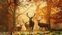 Őszi feltöltődés