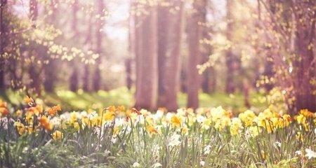 Tavaszi ajánlatunk