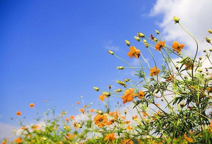 Tavaszi pihentető hétköznapok