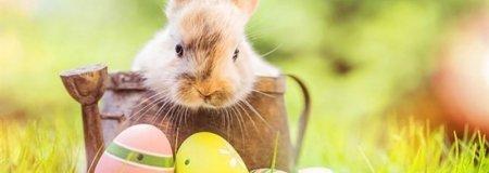 Húsvét az AquaTherm Hotelben