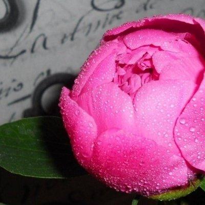 Virágzó Pünkösd
