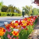 Tavaszi wellness virágzás Zalakaroson