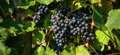 Swedish harvest 2016