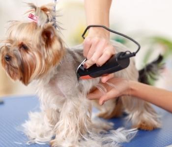 Kutyakozmetikai kezelések