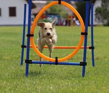 Agility pálya kutyáknak a Dobogóban