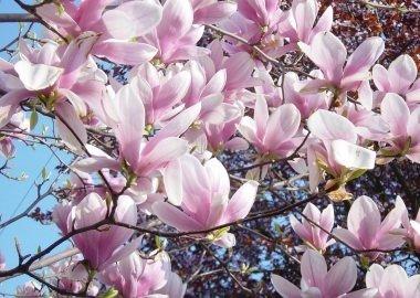 Tavaszi Ébredés Zalakaros Varázsával