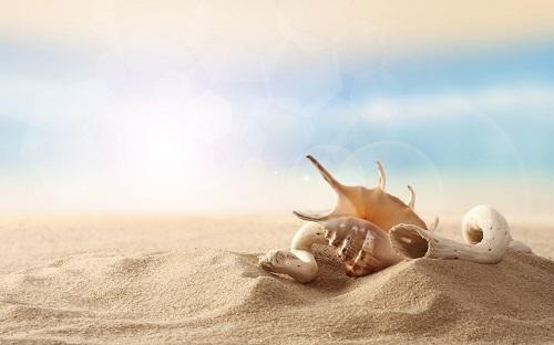 sand-and-shells