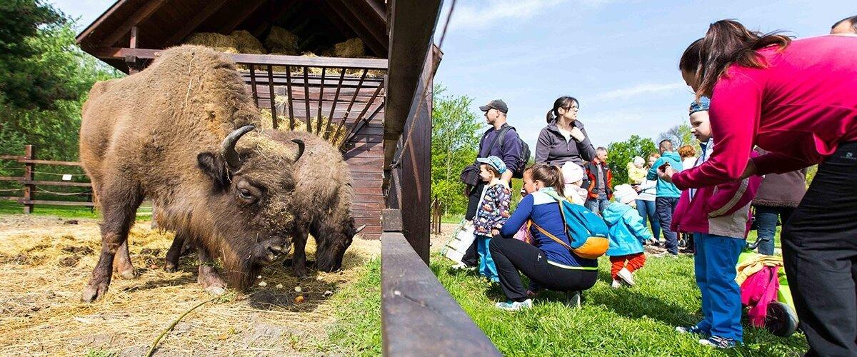 Körösvölgyi Állatpark
