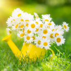 Spring swarming
