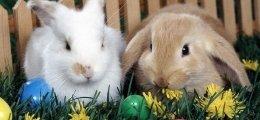 Húsvéti Ünnepek Kecskeméten!