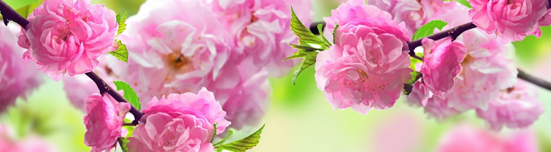 Tavaszváró hétköznapok