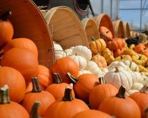 Halloween Szieszta