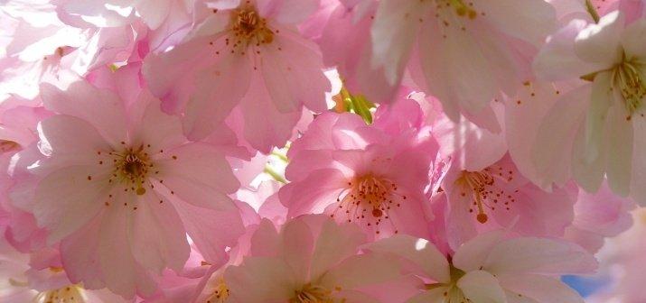 Soproni feltöltődés a virágzó természet erejével és ajándékkuponokkal