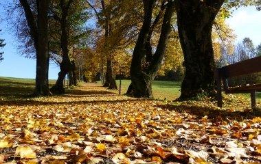 Varázslatos őszi szállásajánlat Budapesten