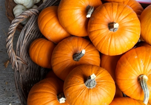 Ноябрь - Предложение месяца - Печеная тыква