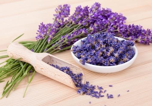 Juni - Angebot des Monats: Lavendel
