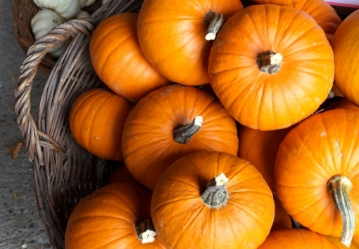 NOVEMBER - Offer of the month: Pumpkin
