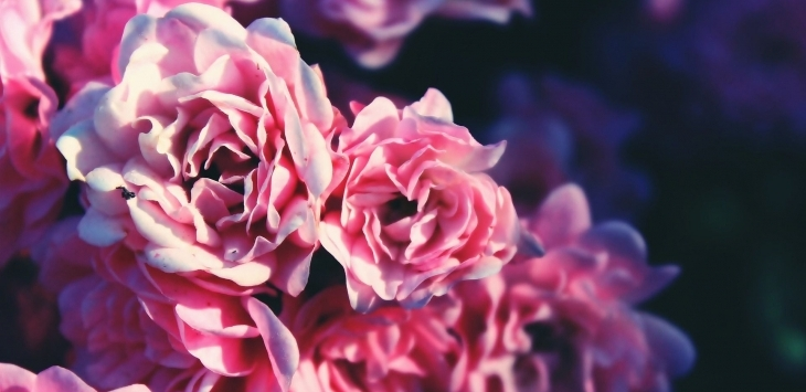 MÁJUS hónap ajánlata: Rózsa