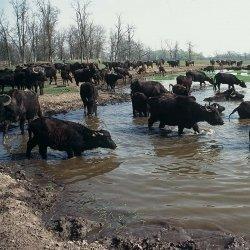 Állati élmények Zalakaros környékén