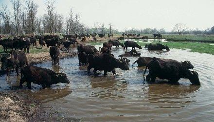 Tierische Erlebnisse in der Umgebung von Zalakaros