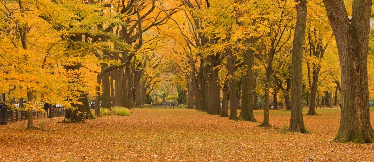 Október 23-ai ünnepi hétvége