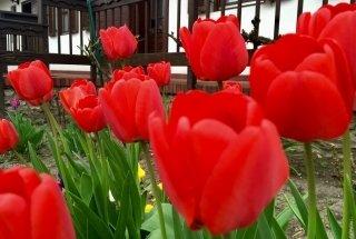 Tavaszi Kiruccanás