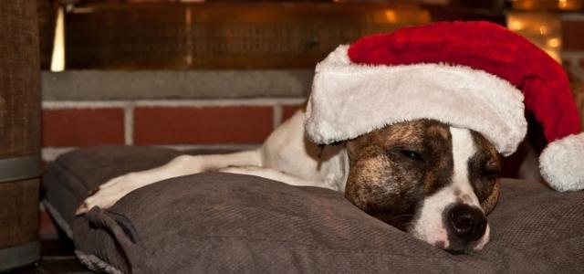 Kutyajó Karácsony - menhelyi állatok karácsonya