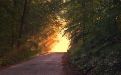 Radtour durch den Mura-Wald