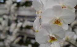 Trópusi kert és Orchidea farm Dobronakon