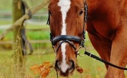 Koňský dvůr Artemisz