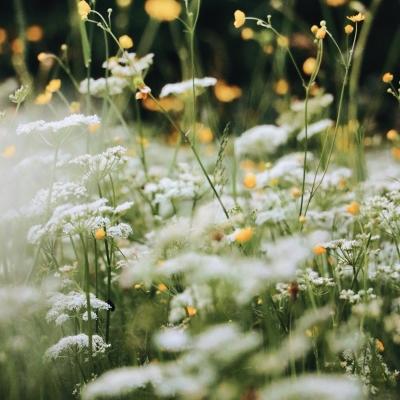 Tavaszköszöntő zakatolás