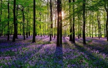 Tavaszi zsongás Zalában