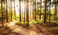 3 napos csoportos erdei elvonulás az Őrség lábánál