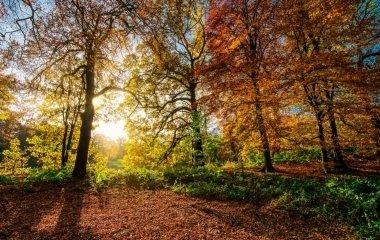 Őszi piknik az Őrség lábánál
