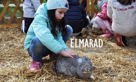 Nyuszi HOPP - ELMARAD