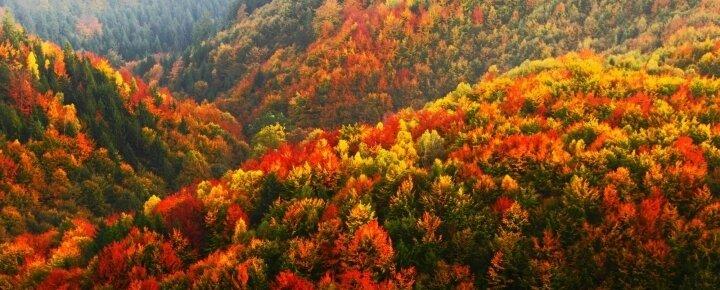 A sokszínű erdő