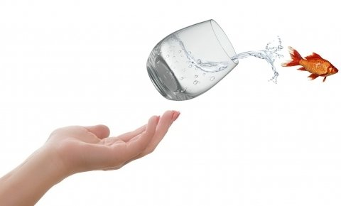 Víz Világnapja a Kis-Balatonon