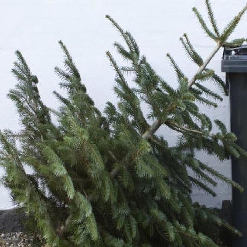 Fenyőfák elszállítása és 2020. évi hulladékszállítási tájékoztató