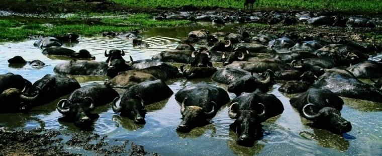 Buffalo Reserve